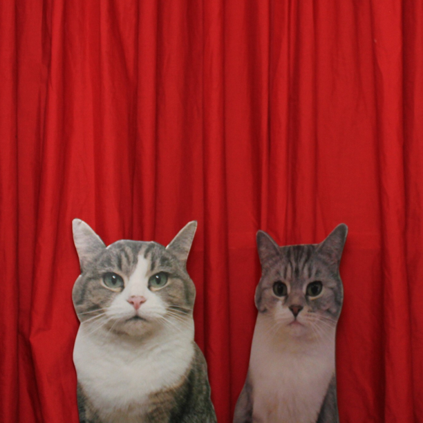 Cats in Photo Booth